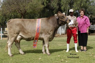 L 5344 - Senior Champion Cow, Owner ms MSE Bezuidenhout of the 