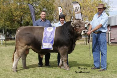 L 5383 - Calf Champion and Reserve Grand Champion of Ian en Ansie 0725960462) Botes Braun Kristalle
