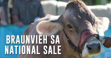 National Braunvieh SA Auction 2016