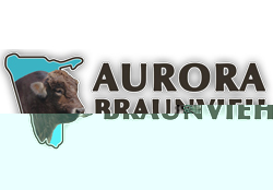 Aurora Braunvieh Stud first began in 2005 with the intention of breeding and producing top quality Braunvieh in Namibia for the Namibian market. We are situated in the Omaheke Region close to Summerdown on the C29.